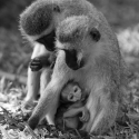 Escape from madness, Samburu Game Reserve, Kenya (2011)