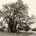 Baobab, Burkina Faso (2009)