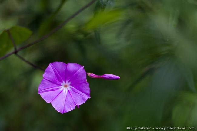 Flower, Godavari, Nepal